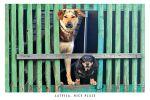 Postcard Dogs' tandem